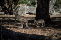 phillip-island-wildlife-park-5959