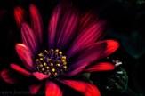 flower-garden-show-macro-edit-1045