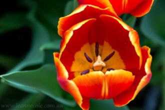 flower-garden-show-macro-lr-1047