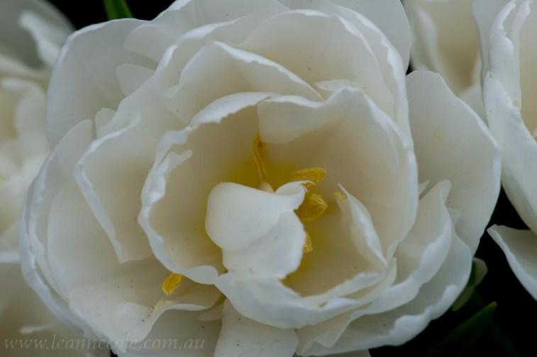 flower-garden-show-macro-lr-1049