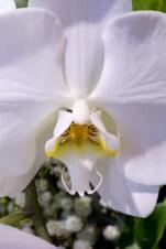 flower-garden-show-macro-lr-1054