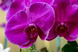flower-garden-show-macro-lr-1055