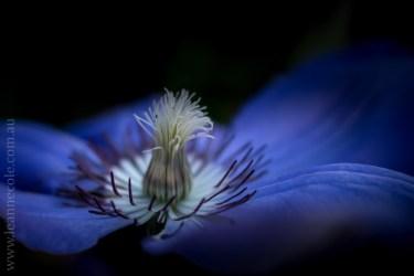 flowers-macro-mifgs-lensbaby-velvet56-9992