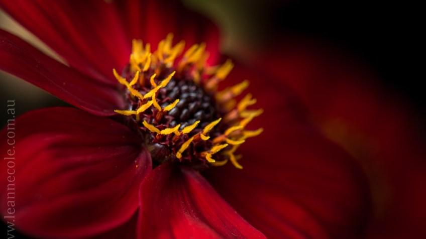flowers-macro-mifgs-melbourne-9741