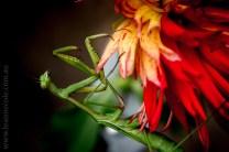 my-garden-macro-morning-1473