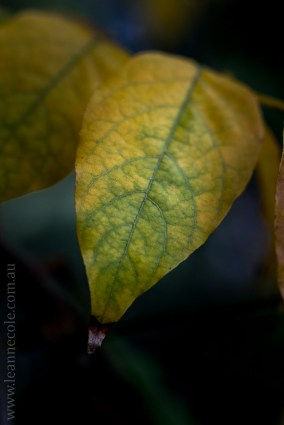 my-garden-macro-morning-1528