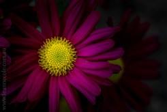 my-garden-macro-morning-1542