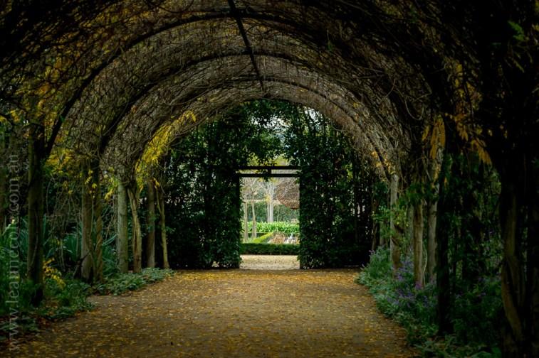 alowyn-gardens-winter-yarra-glen-3261