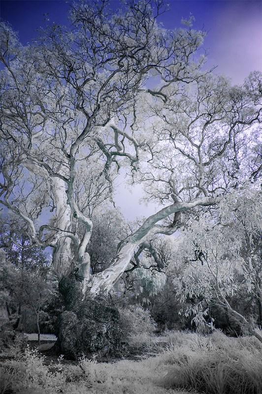binnak-park-colours-infrared-melbourne