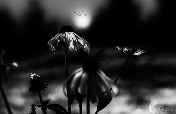 17/THE RUNES OF THE GATEKEEPER'S DAUGHTER