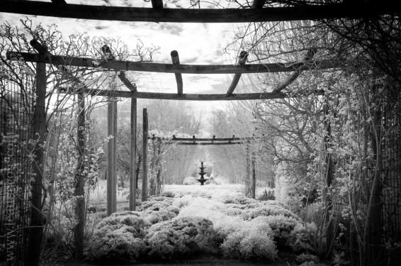 alowyn-gardens-infrared-yarraglen-22956