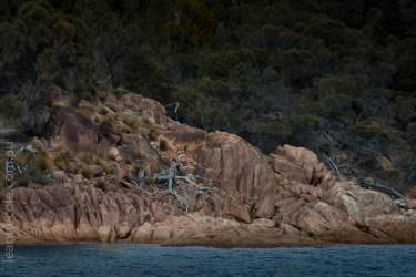 tasmania-trip-wineglassbay-boat-cruise-7508