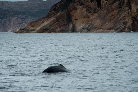 tasmania-trip-wineglassbay-boat-cruise-7915