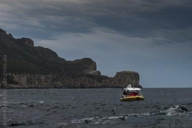 tasmanisland-cruise-pennicott-tasmania-cliffs-9474