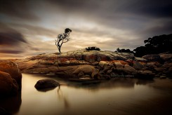 Tree on a Rock, Binalong Bay