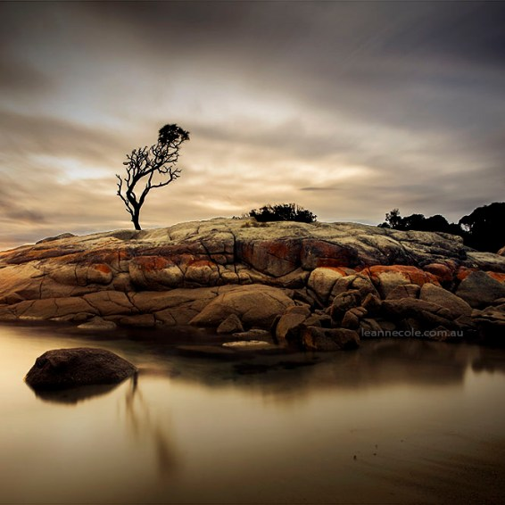 Tree on a Rock, Binalong Bay