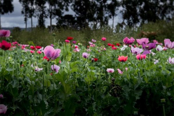 alowyn-gardens-lensbaby-velvet-85-1255