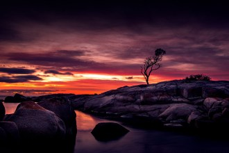 binalong-bay-sunrise-tasmania-tree