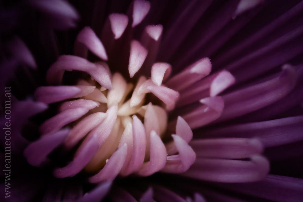 macro-photography-article-fineart-1