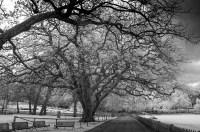 portarthur-tasmania-historic-site-infrared-24144