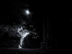 4/ THE SHADY TREE