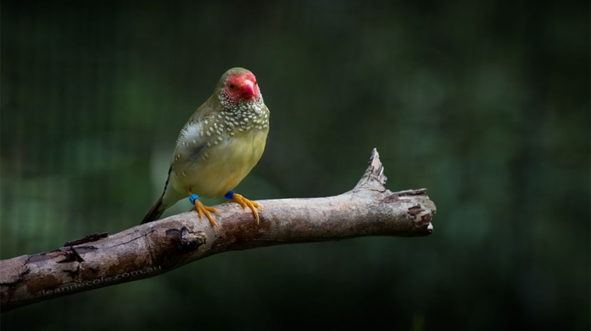 bird-lens-nikon-d850-healesville-sanctuary