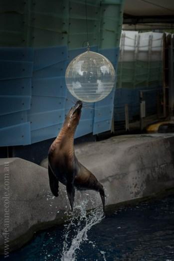melbourne-zoo-animals-1on1-2180