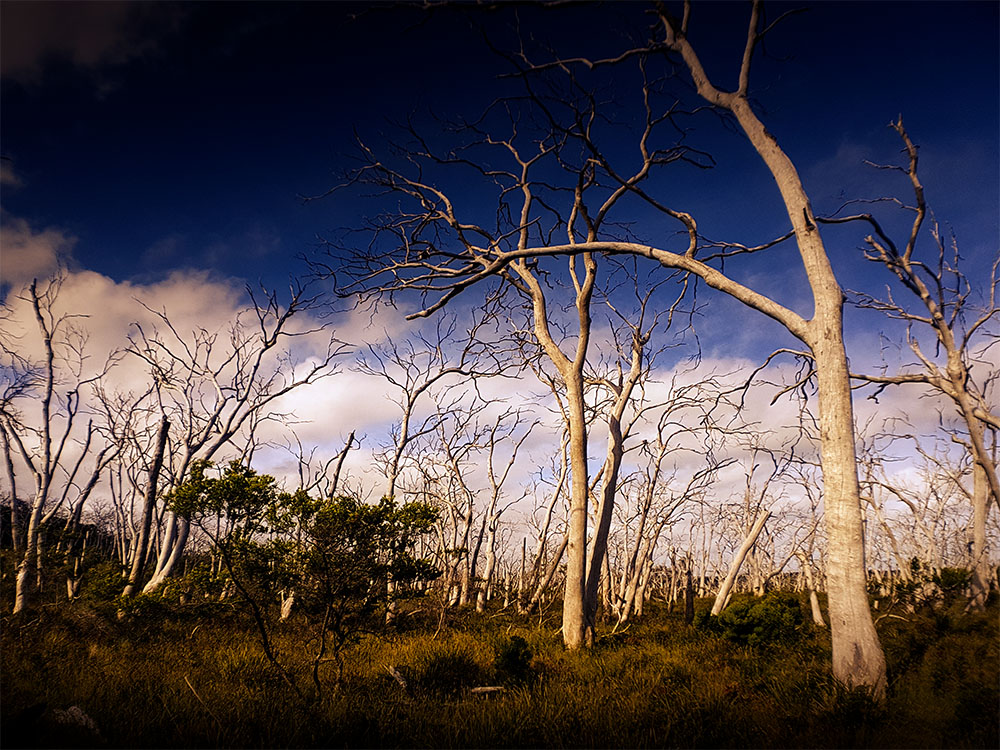 cape-otway-wideangle-deadtrees-strumanoptics