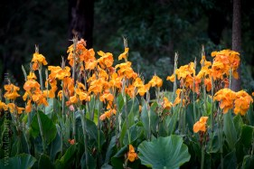 blue-lotus-waterlillies-flower-garden-0459