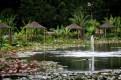 blue-lotus-waterlillies-flower-garden-0656