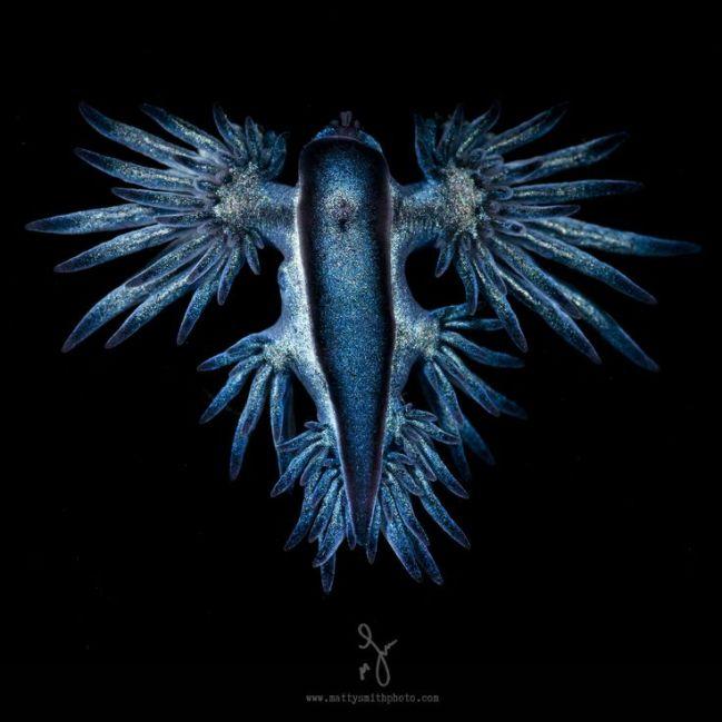 b0beba011a2988d96878785344b85f2f--matt-smith-blue-dragon