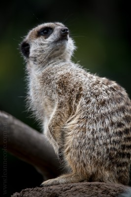melbourne-zoo-animals-tamron-150600-4259