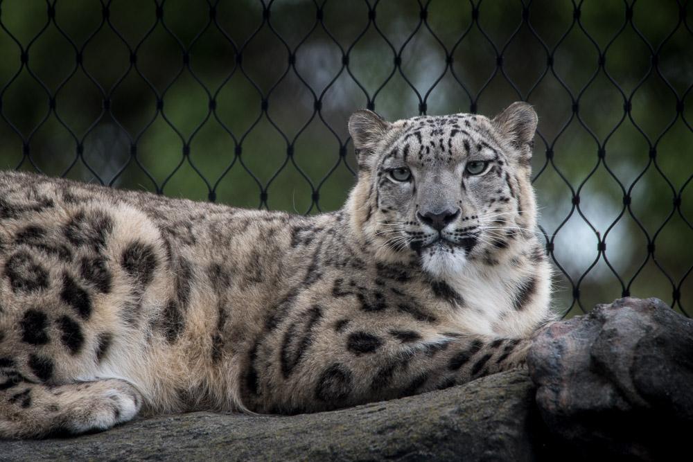 melbourne-zoo-animals-tamron-150600-4688