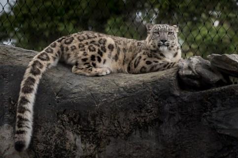 melbourne-zoo-animals-tamron-150600-4703