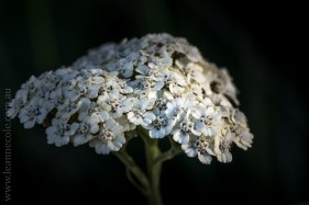 mifgs-flower-macro-tamron-melbourne-7059