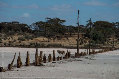 saltpans-salinity-SwanHill-rural-environment-2577