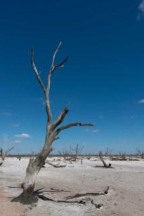 saltpans-salinity-SwanHill-rural-environment-2793