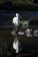 serendip-sanctuary-birds-victoria-geelong-5519