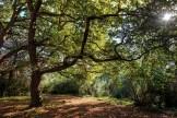 autumn-oak-heidelberg-trees-landscape