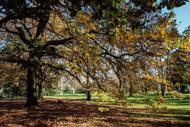 sills-bend-banyule-autumn-fujifilm