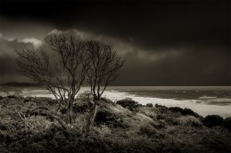 12-apostles-tree-cliff-monochrome-australia
