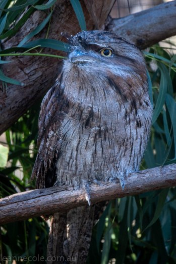 moonlit-sanctuary-birds-animals-wild-3705