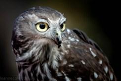moonlit-sanctuary-birds-animals-wild-4136