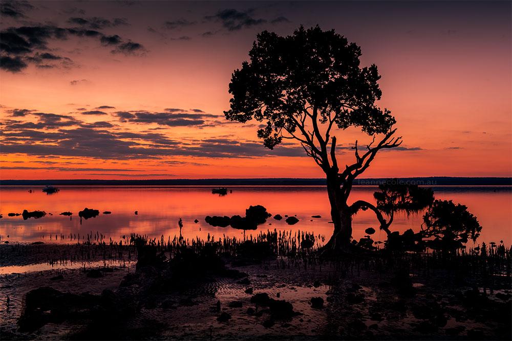 point-tendy-sunset-longexposure-tree