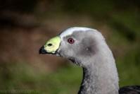 moonlit-sanctuary-birds-animals-wild-3545