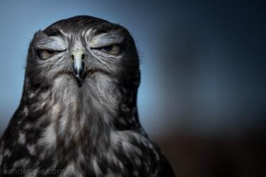 moonlit-sanctuary-birds-animals-wild-4083