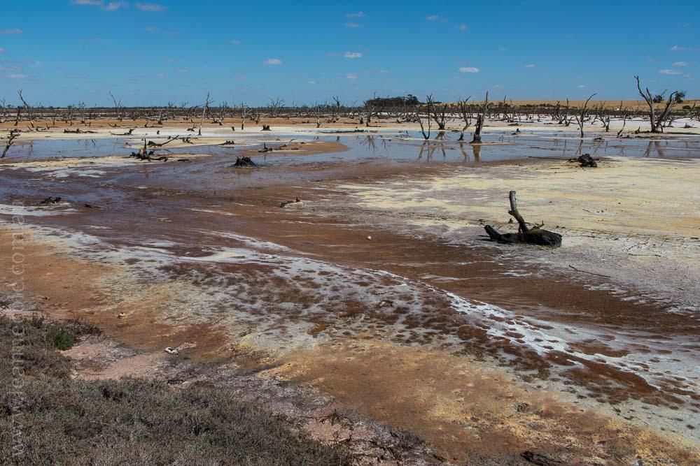 saltpans-salinity-SwanHill-rural-environment-2829