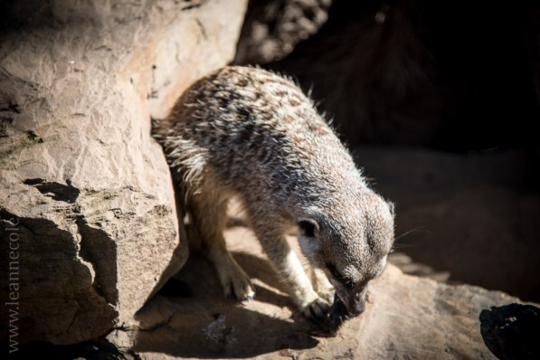 zoo-animals-plants-sunny-day-5095