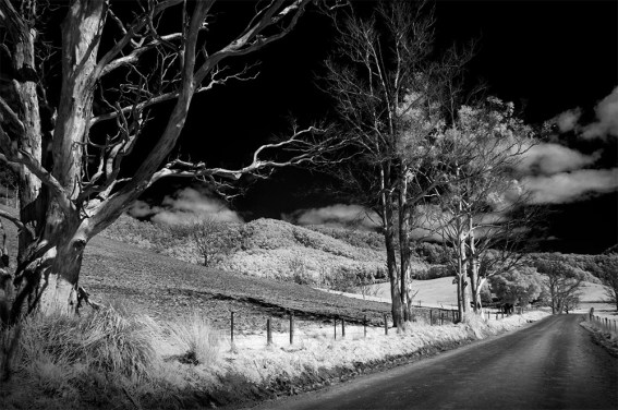 Tasmania-country-trees-monochrome-infrared