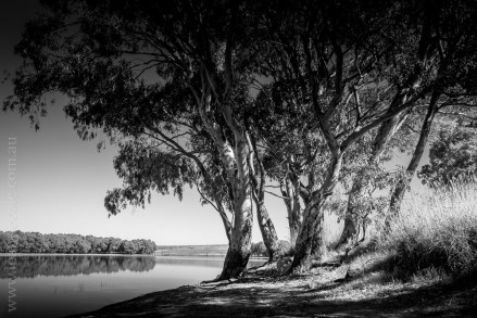 cairn-curran-reservoir-trees-0329
